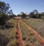 Making Tracks through the desert