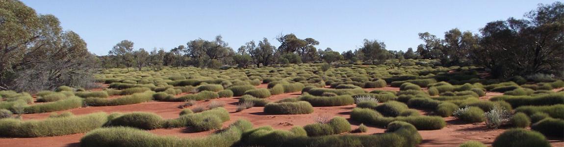 Honey Ant Gallery Spinifex Desert Travels